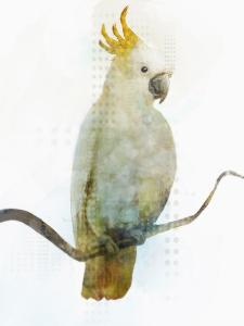 Cockatoo by PI Creative Art