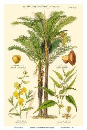 https://imgc.artprintimages.com/img/print/piassava-palm-jute-sunn-hemp-plants-used-in-clothing-cordage_u-l-f9inx10.jpg?p=0