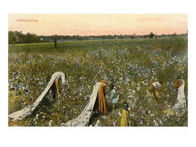 Picking Cotton--Art Print