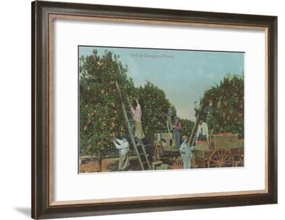 Picking Oranges in Florida--Framed Art Print
