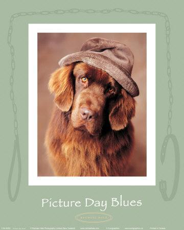 Picture Day Blues-Rachael Hale-Art Print