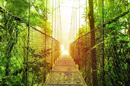 Picture of Arenal Hanging Bridges Ecological Reserve, Natural Rainforest Park-Anna Omelchenko-Art Print