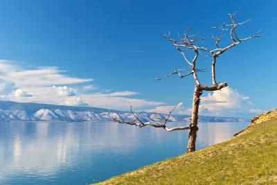 Picturesque Dry Larch on the Shores of Lake Baikal-katvic-Photographic Print