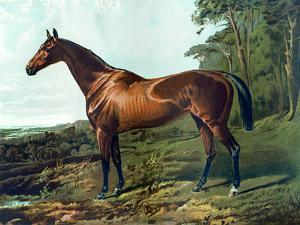 "Horse Chromolithograph ""Fair Nell,"" 1800s by Piddix"