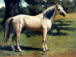 "Horse Chromolithograph ""The Arab Pony Charger,"" 1867 by Piddix"