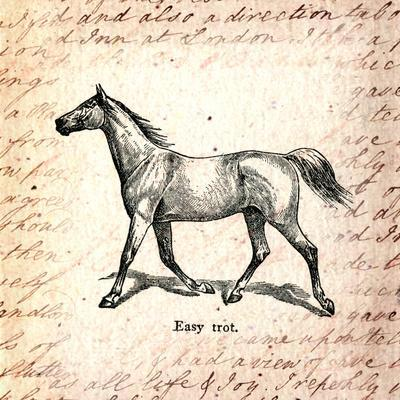 Horses and Love Letters