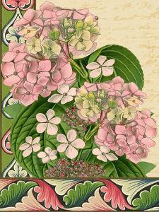 Hydrangea on Love Letters by Piddix