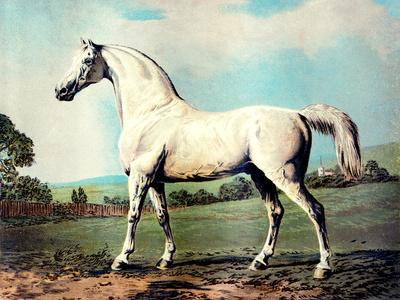 """Vintage White Horse Chromolithograph """"Mambrino,"""" from the Picture by George Stubbs 1817"""