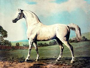 """Vintage White Horse Chromolithograph """"Mambrino,"""" from the Picture by George Stubbs 1817 by Piddix"""