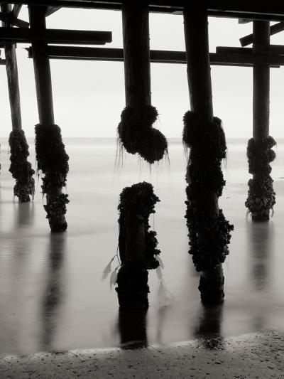 Pier Pilings 10-Lee Peterson-Photographic Print