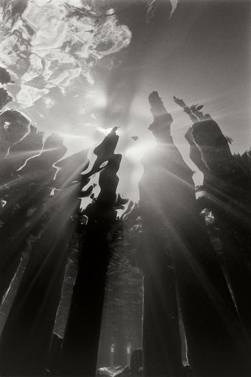 Pier Pilings 6-Lee Peterson-Photographic Print