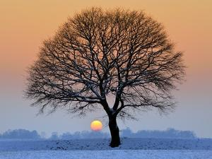 Winter Sunset with Silhouette of Tree by pierre hanquin photographie