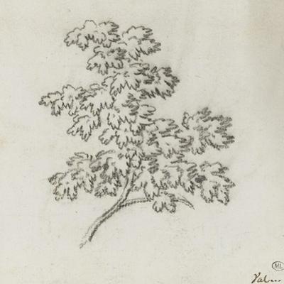 Branche d'arbre avec des feuilles by Pierre Henri de Valenciennes