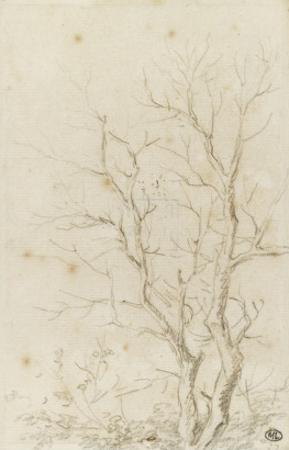 Deux branches d'arbres nues émérgeant d'un feuillage by Pierre Henri de Valenciennes
