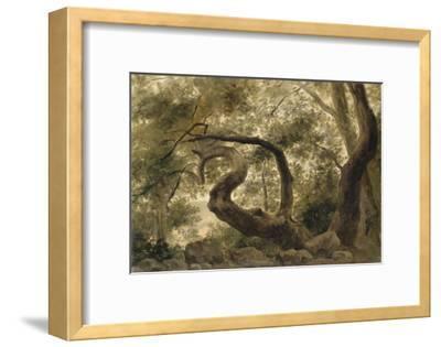 Sous-bois, arbres aux branches tortueuses