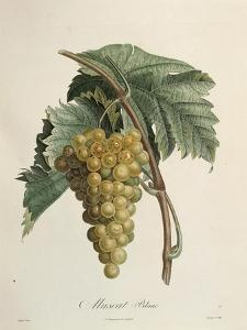 White Muscat Grapes by Pierre Jean Francois Turpin