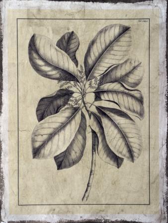 Embellished Antique Foliage II