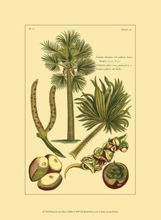 Printed Exotic Palm I