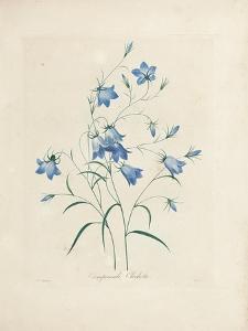 Bluebells, from 'Choix Des Plus Belles Fleurs Et Des Plus Beaux Fruits', 1827-33 by Pierre-Joseph Redout?