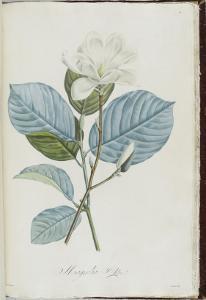 Description des plantes rares que l'on cultive à Navarre et à Malmaison by Pierre-Joseph Redout?