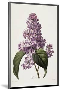 Lilacs by Pierre Joseph Redout?