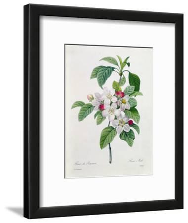 """Apple Blossom, from """"Les Choix Des Plus Belles Fleurs"""""""