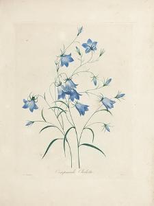 Bluebells, from 'Choix Des Plus Belles Fleurs Et Des Plus Beaux Fruits', 1827-33 by Pierre-Joseph Redouté