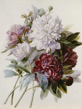 Bouquet of Red, Purple and White Peonies