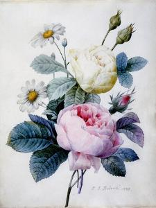 Bouquet of Roses with Daisies, Published 1834 by Pierre Joseph Redoute