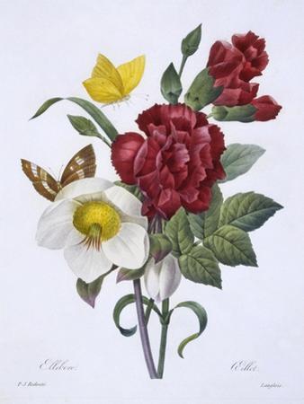 Ellebore Et Oeillet, from 'Choix Des Plus Belles Fleurs', Published Paris, 1829