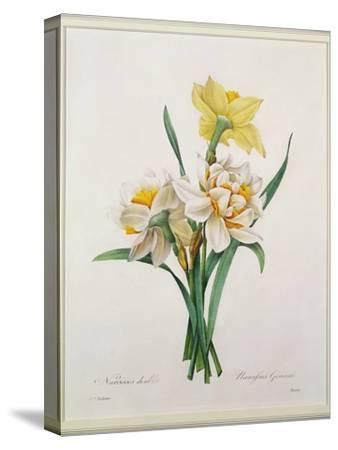 Narcissus Gouani (Double Daffodil), Engraved by Bessin, from 'Choix Des Plus Belles Fleurs', 1827