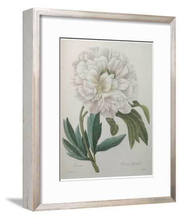 Official Peony