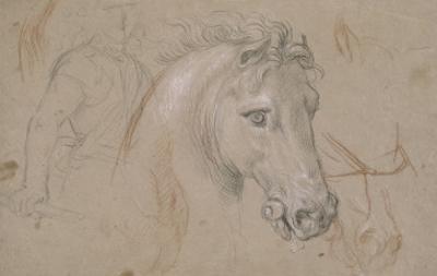 Tête et encolure de cheval de profil à droite, poitrail avec les jambes et divers croquis by Pierre Mignard