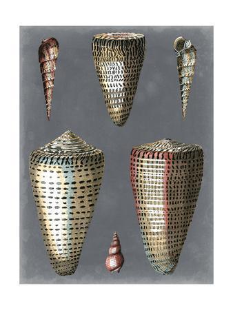 Midnight Shells I