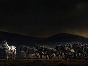 An Evening in Kenya by Piet Flour