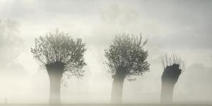 Awakening Earth by Piet Flour