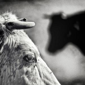 B & W by Piet Flour