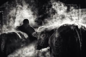 farm life by Piet Flour