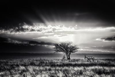Sunrise With Hartebeest