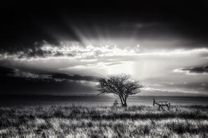 Sunrise With Hartebeest by Piet Flour