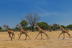 Wild and Free by Piet Flour