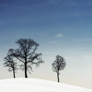 Winter Haiku by Piet Flour