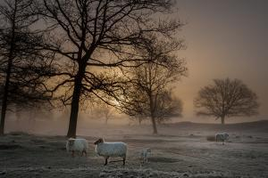 Foggy Morning by Piet Haaksma