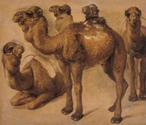 Cinq chameaux by Pieter Boel