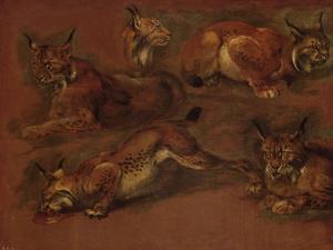 cinq lynx by Pieter Boel