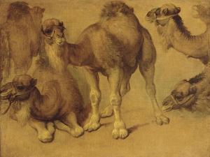 Dromadaires by Pieter Boel