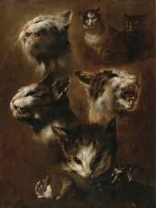 Têtes de chats, un lapin, une tête de chèvre by Pieter Boel