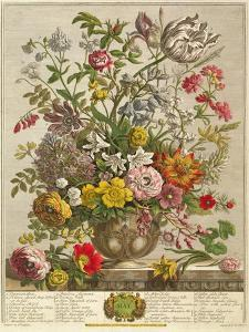 May, from 'twelve Months of Flowers' by Robert Furber (C.1674-1756) Engraved by Henry Fletcher by Pieter Casteels