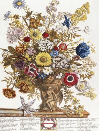November, from 'Twelve Months of Flowers', 1730 by Pieter Casteels
