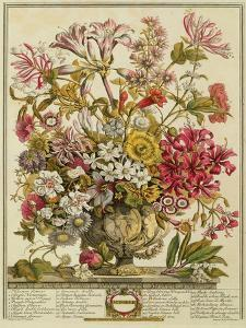 October, from 'twelve Months of Flowers' by Robert Furber (C.1674-1756) Engraved by Henry Fletcher by Pieter Casteels